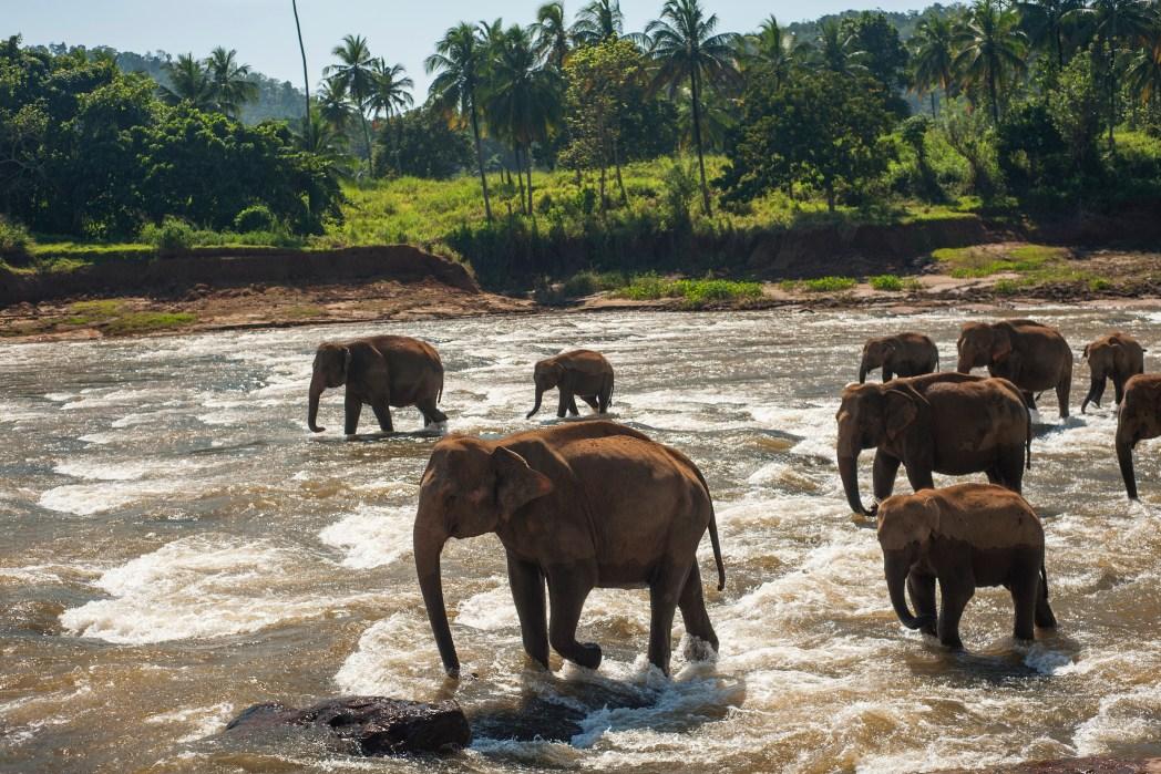 非洲動物大遷徙